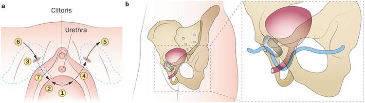 women urien